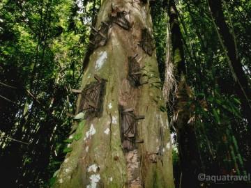 Kambira pohřební strom dětí etnika Toraja na Sulawesi