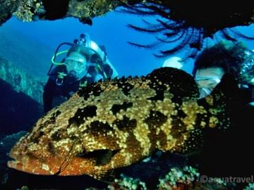 Kanic a potápěči na vraku Liberty Tulamben. Nejlepší potápění na Bali