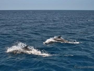 Delfíni doprovází loď. Za komodskými draky - exotické zájezdy