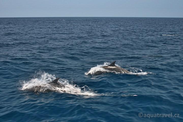 Delfíni doprovází loď