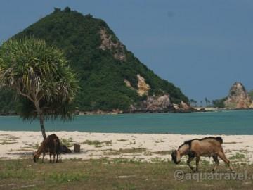Lombok Kuta 1