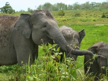 zajezd-sumatra-sloni