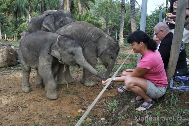 Setkání se slony v Tangkahanu na Sumatře