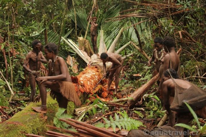 Zpracování ságové palmy