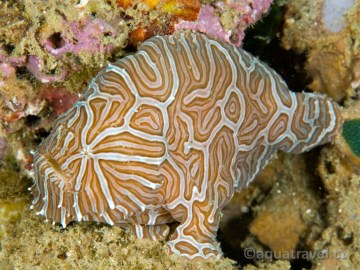 Psychedelická ryba - endemit