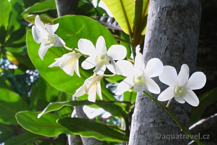 Orchideje na Bunakenu