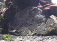 石組水槽で水草繁茂のカギになる!?風山石の酸処理の方法