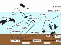 アクア&カメ水槽維持の基本!生物濾過とバクテリアの働き