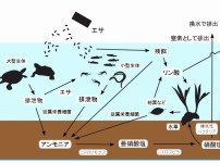 アクアリウムにおける水槽内の有機物サイクル