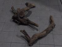 茶色い水と永遠にオサラバするための流木のアク抜き方法
