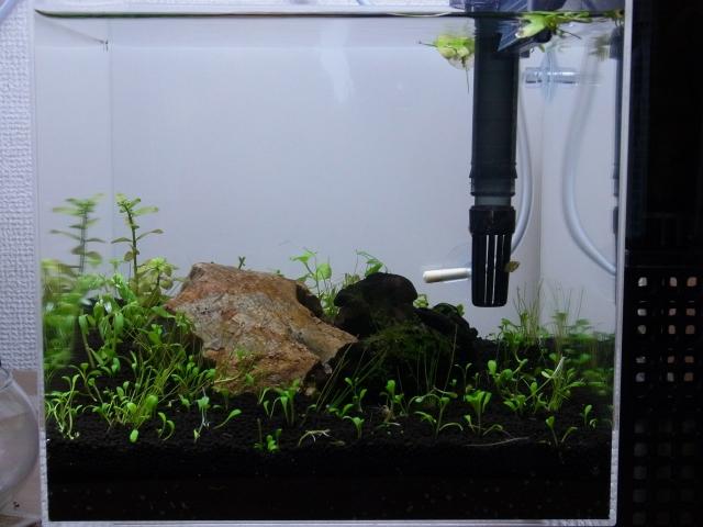 小型水草水槽立ち上げ直後の様子