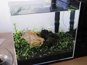 小型水草水槽の立ち上げ!設置場所からろ過までコレで完璧!