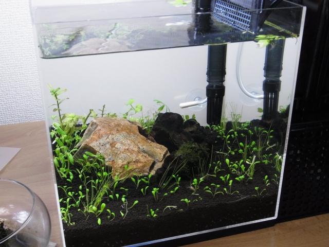 小型水草水槽のセッティングと立ち上げ