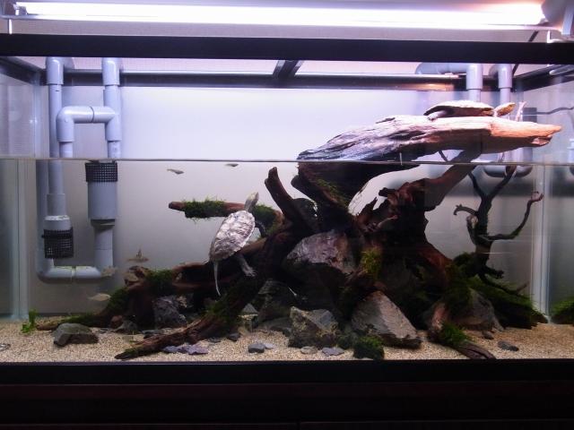 90cmカメ水槽の新しいレイアウト 正面1