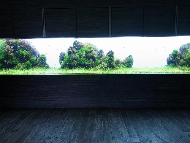 7mパノラマ水草レイアウト水槽