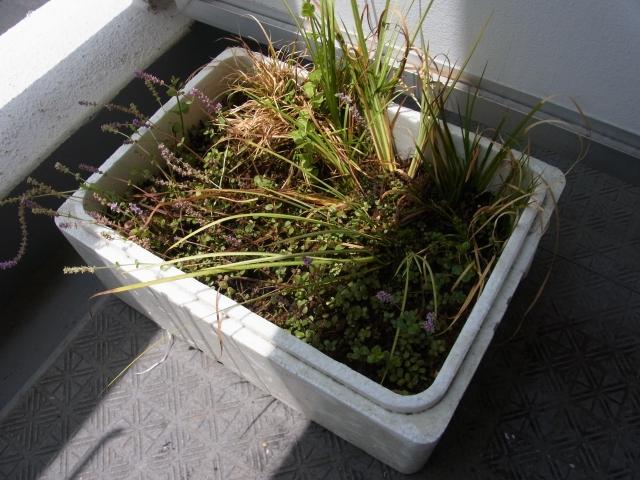 1年かけて繁茂した水草の水上葉