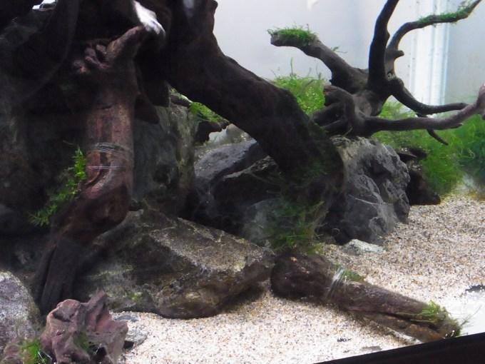 流木と石が絡みあうレイアウト