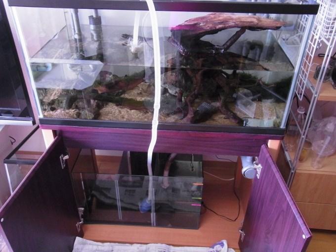 飼育槽から濾過槽に注水する