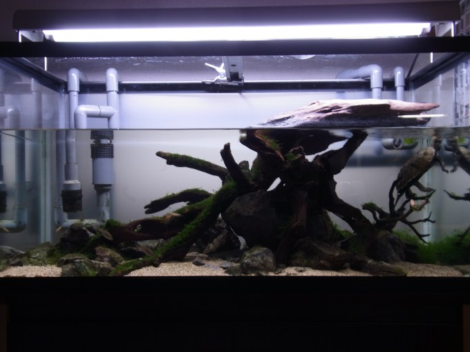 カメのレイアウト水槽 正面