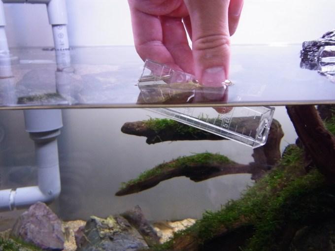 テストする水槽の飼育水で試験管をすすぐ