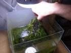 熱帯魚水槽のリセット方法-陰性水草レイアウトができるまで