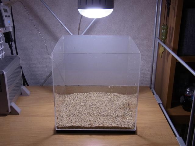 田砂を敷いた20cmキューブ水槽
