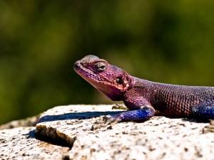 爬虫類と光/温度-バスキング・紫外線ライトと亀/トカゲの生理機能
