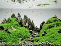 今日から始めたい!アクアリウム・熱帯魚飼育の魅力12選