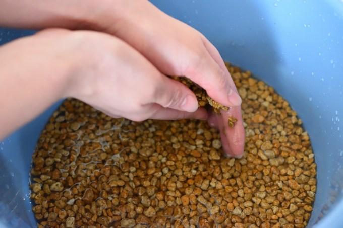 苔テラリウムに使う軽石を洗う