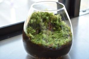 苔テラリウムの作り方-容器や材料選び・苔の種類・作業手順を解説!