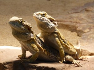 亀やトカゲ(爬虫類)飼育用ライト・ヒーターの使い方!バスキングに紫外線灯・メタハラなどを活用する方法