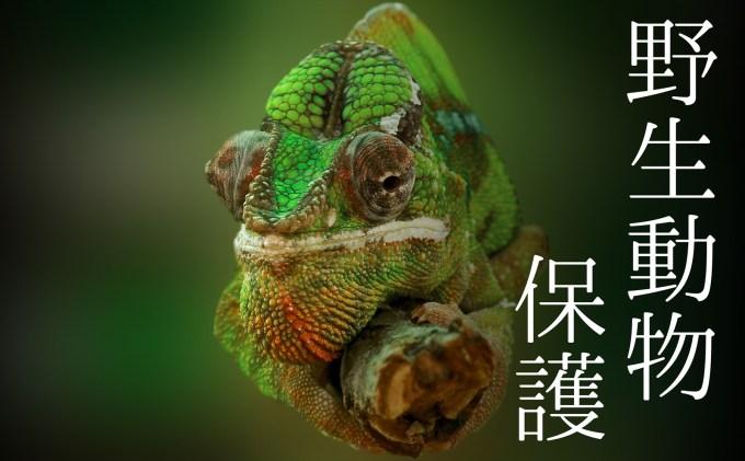 野生生物保全