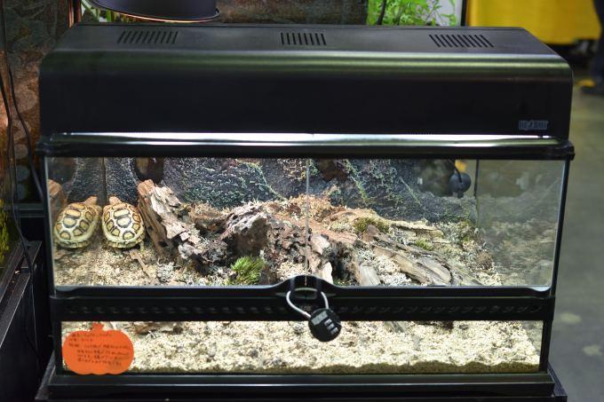 エキゾテラ(GEX)のリクガメ レイアウト