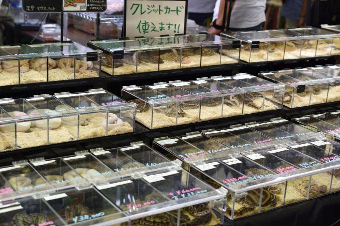 ナゴレプで販売されていたヘビ
