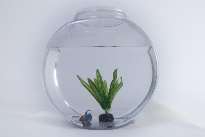 ボトルアクアリウム(グラスアクアリウム)と水草と熱帯魚