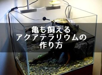 亀も飼えるアクアテラリウムの作り方