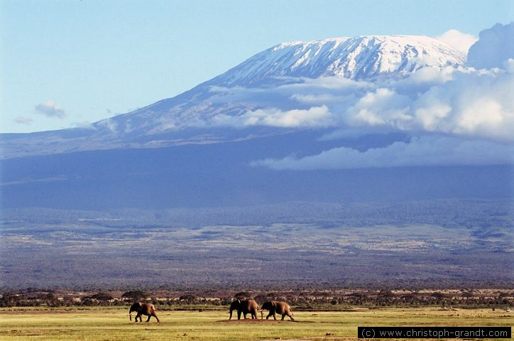 kilimanjaro-and-elephnats