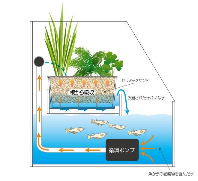 水の循環POP  (1)