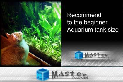 アクアリウム 水槽の選び方 初心者必見おすすめサイズ!