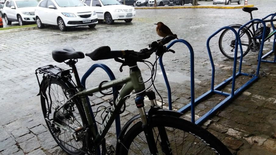 04.Aquela_que_Pedala_O_passaro_e_a_bicicleta_Luciana_Vieira