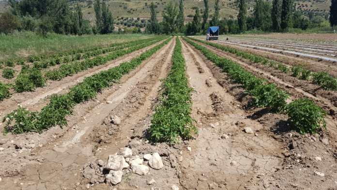 Los agricultores no dejan de trabajar sus campos para abastecer a los supermercados