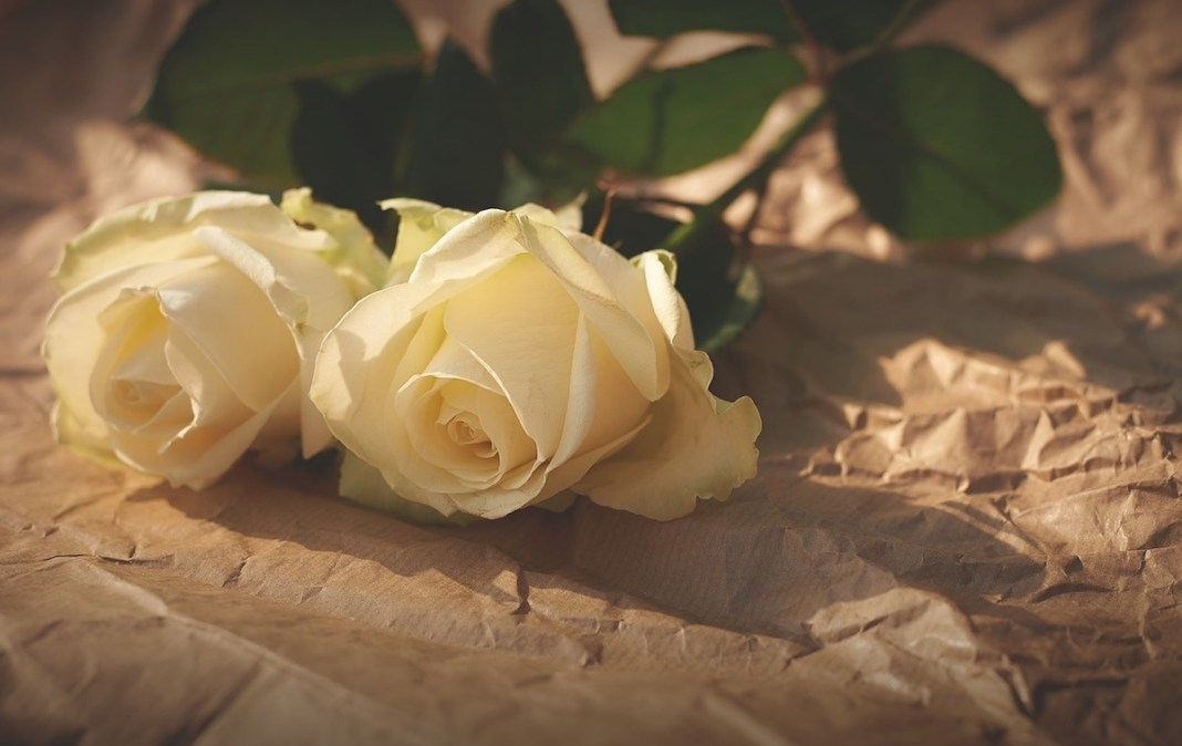 Flores rosas amarillas