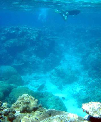 Great Barrier Reef, CAIRNS, QLD