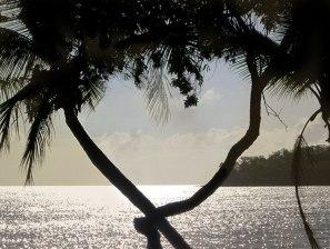 [ PALM COVE (Cairns), QLD, Australia ]
