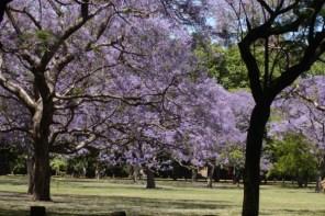 Primavera em Buenos Aires : 10 passeios grátis