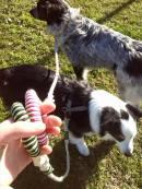 Baloo_Penny guinzaglio corda canapa naturale aquisette
