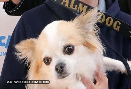 أنواع الكلاب المنزلية اليفة كلاب صغيرة