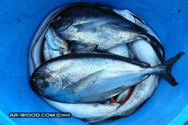 اكل السمك المقلي في المنام