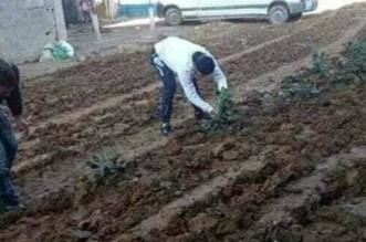 """صور مواطنين يزرعون """"البطاطس"""" بالشارع العام تخلق جدلا بين المغرب والجزائر"""