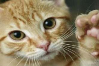 شاب يُعنف قطة يثير سخط رواد مواقع التواصل